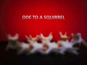 Ode to a Squirrel by Danira Miralda - Incipio Modo Calgary